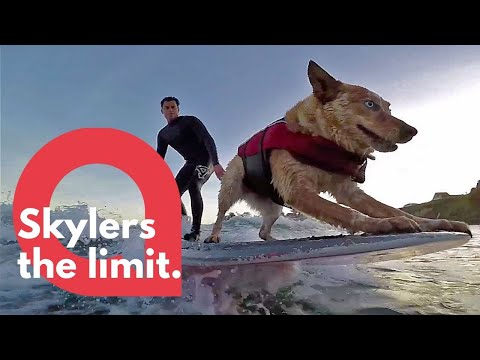 Amazing footage of a talented surfing dog | SWNS