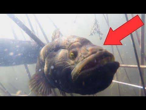 Подводная охота на метеоритном озере! МОНСТР! ยิงปลา ดำน้ำยิงปลา