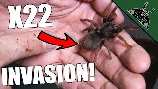 UNBOXING HUGE AMOUNT OF TARANTULAS!