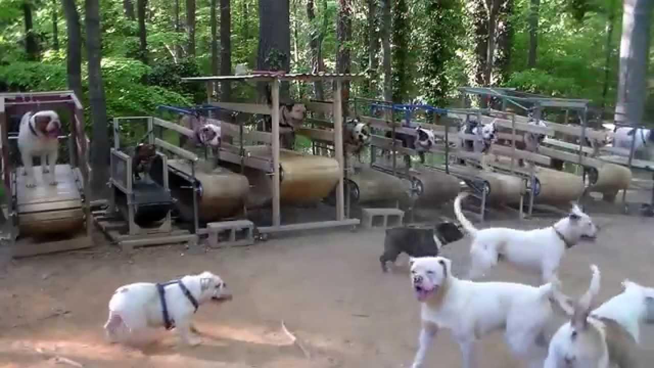 Fitness pour chien youtube - Tapis de course pour chien ...
