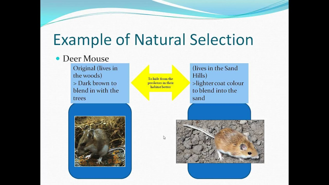 What Is Artificial Selection Youtube