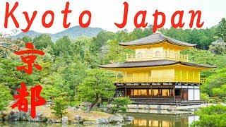 Trip to Kyoto Japan: Rickshaw / Arashiyama / Bamboo Forest / Kinkakuji / Fushimi Inari Taisha/ 京都旅行 thumbnail
