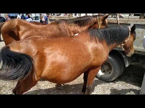 Рынок Лошадей Чечня.