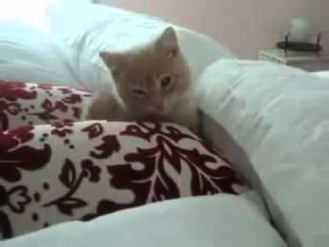 видео: Трогательная и поучительная история спасения котенка