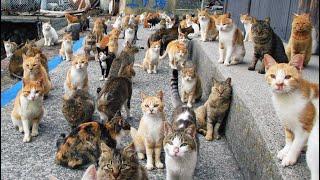 Cat Island Sin Japan  Tausug Info Vlog
