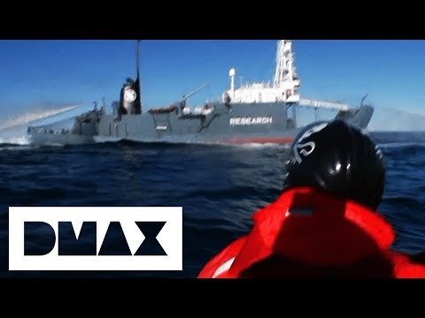 Sea Shepherds Try To Board Japanese Whaling Ship & Arrest Captain | Whale Wars