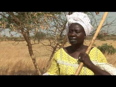 Inversion de tendance de la désertification en Afrique