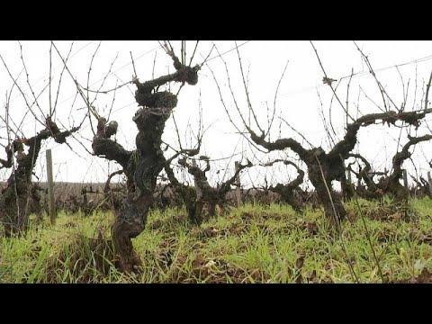 La conquista internacional del 'Beaujolais nouveau'