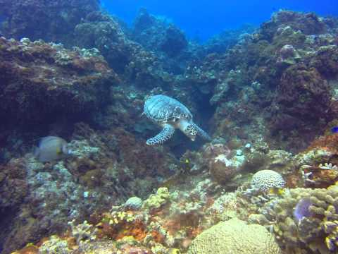 Day 2, Cozumel Diving, Mexico 12-7-15