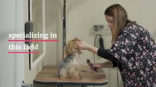 Service Dog Training How to Prepare Your