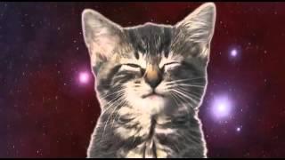 Кошачий реп-клип