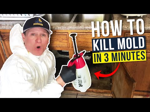 Black Mold - How We Get Rid Of Mold In Under 3 Min!