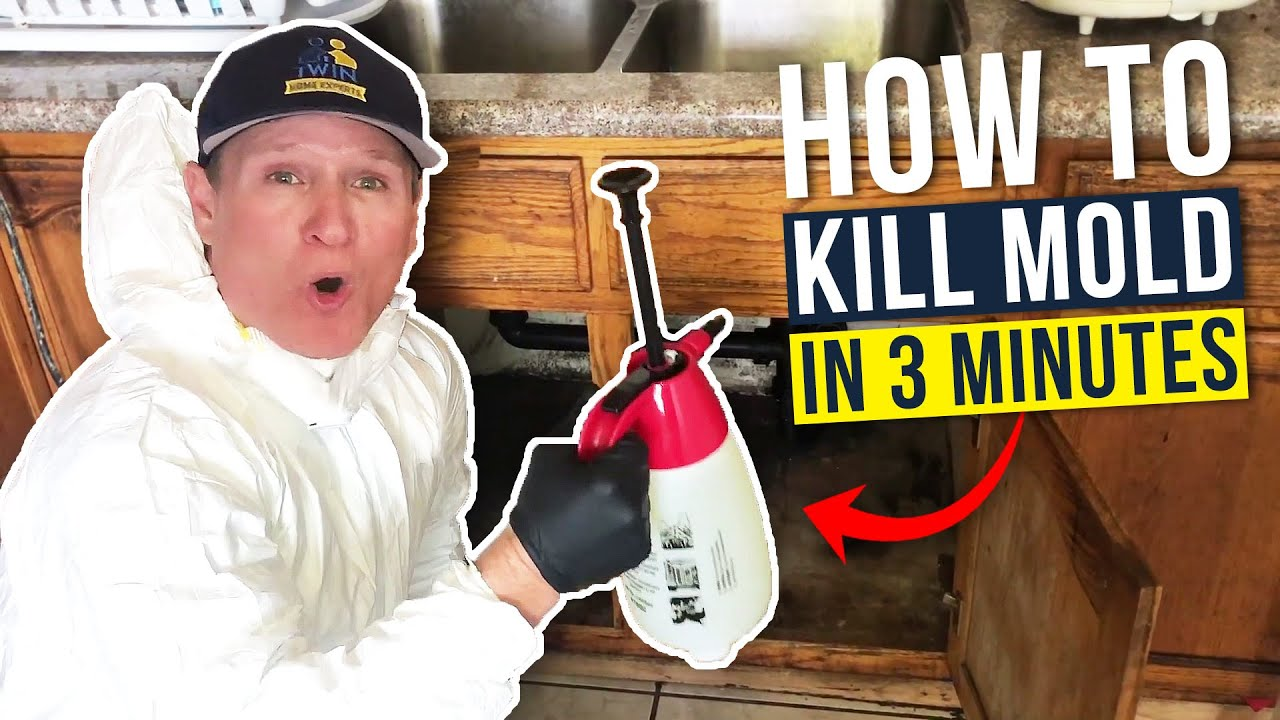 Black Mold How To Kill Toxic Mold In Under 3 Mins
