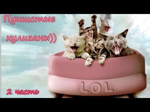 Вопрос: Кто самый пушистый и ленивый из диких котов?