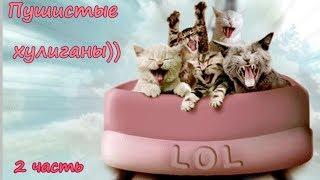 ПУШИСТЫЕ ХУЛИГАНЫ)) -2  Коты проказники) Cats bully