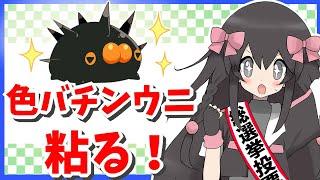 【ポケモン剣盾】色バチンウニ粘る→交換会!!(▽∞▽)【生配信】