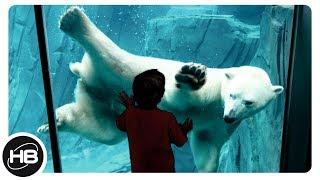 10 ЛУЧШИХ ЗООПАРКОВ МИРА. Зоопарки