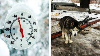 Husky Chained Up and Left to Freeze For 15 Years, Finally Gets a Real Family!