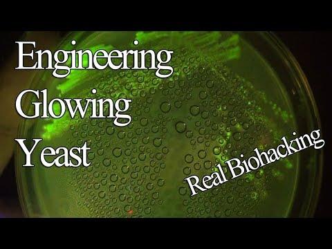 Engineering Yeast To Glow Green In UV To Make Glowing Beer/Wine