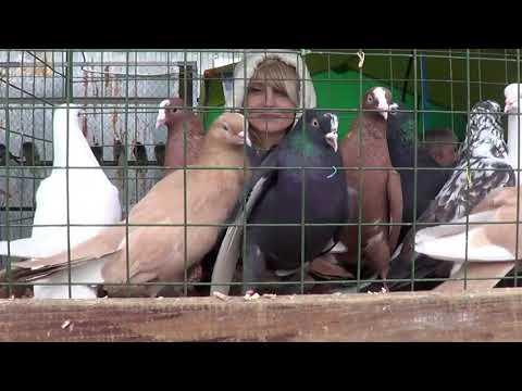 Выставка-Ярмарка Бескружных пород голубей в Ступино.19.10.2019