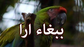 الحيوانات - الببغاء