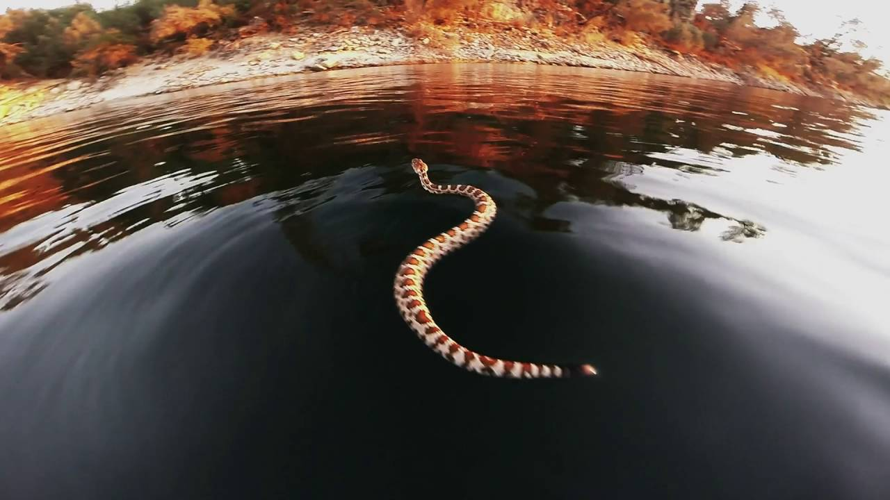 There 39 s a rattlesnake youtube for Lake perris fishing report