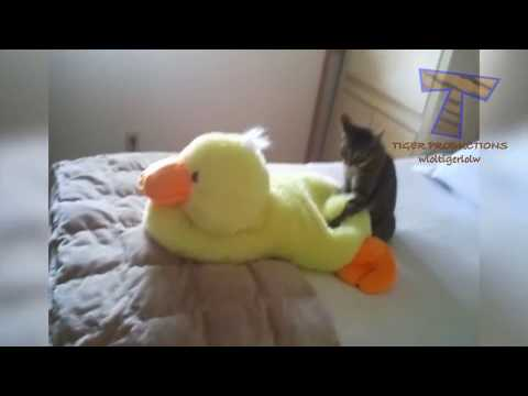 PREPARE to LAUGH - Funny CATS, but like NOTHING YOU'VE EVER SEEN BEFORE