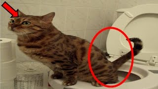 How to Prevent Your cat urinating in house