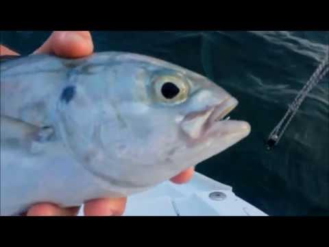 Release it - Fonds marin, îles grenadines