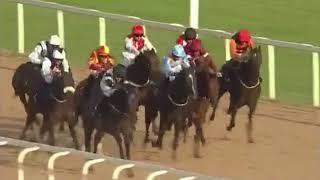 UP THE MILLERS Maiden Race  Newcastle 2018 08 09 6 furlongs