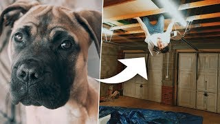 Playing HIDE & SEEK with my NEW PUPPY i...