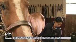 ANIMAUX : Le Calvados aux petits soins pour ses chevaux