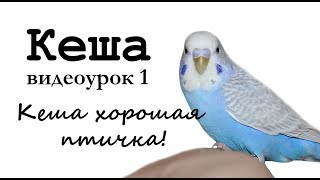 """🎤 Учим попугая Кеша говорить. Видеоурок 1: """"Кеша хорошая птичка"""""""
