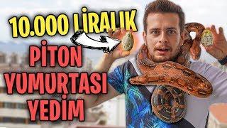 10.000TL YILAN YUMURTASI YEDİM!