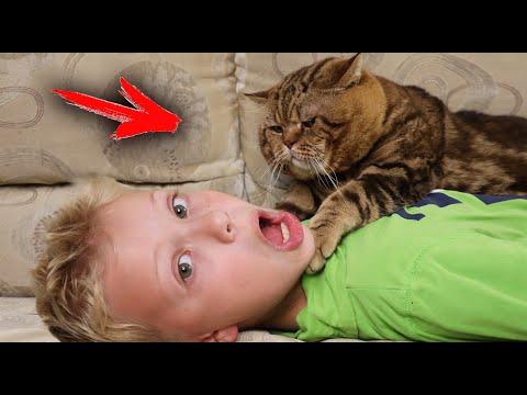 Мой Кот Пытается Меня Убить? Что Делает Котэ Один Дома?