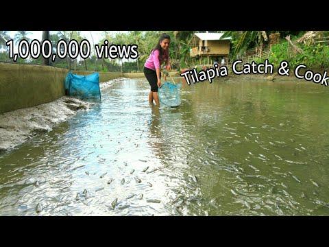 Harvesting Tilapia From Our Fishpond-Buhay Probinsya