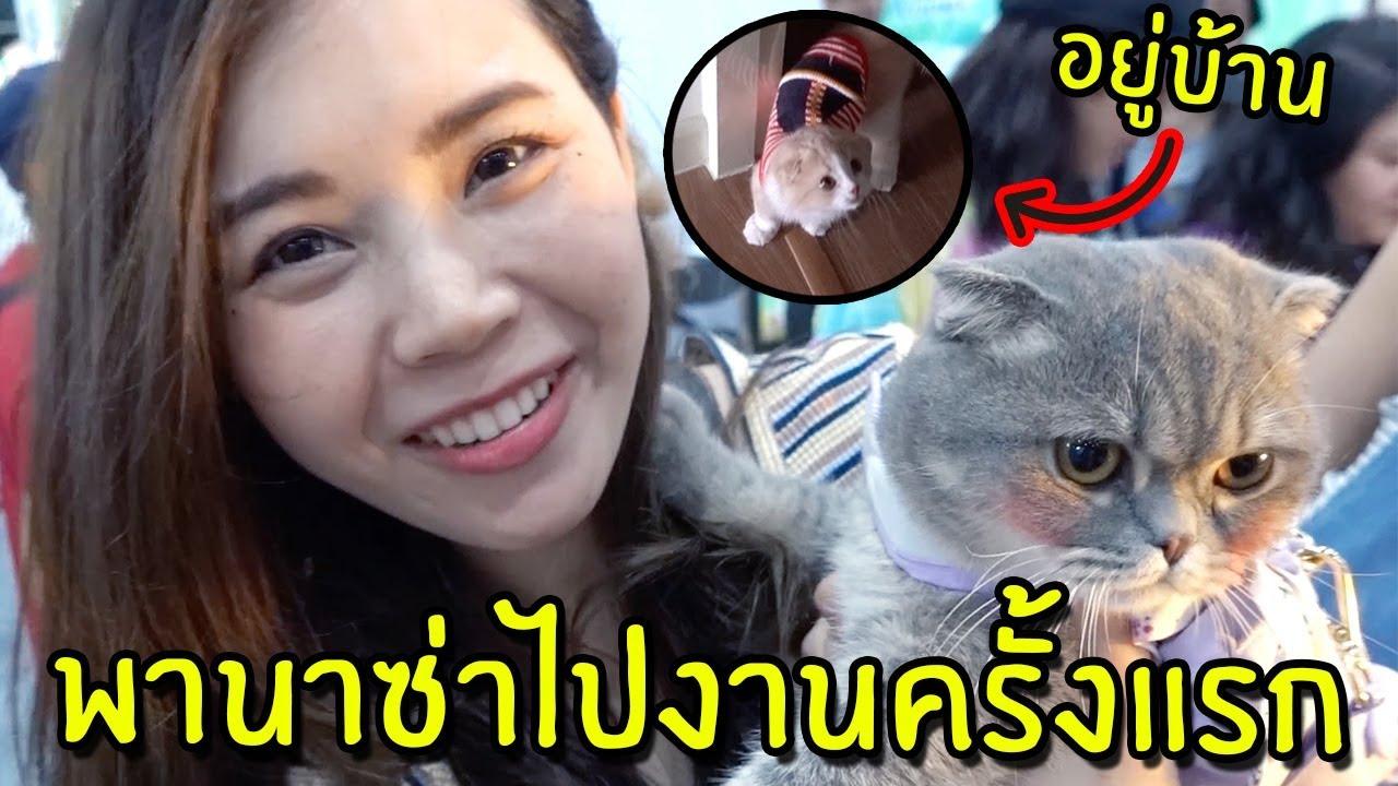 พานาซ าไปเท ยว Pet Expo คร งแรก กล วมาก Youtube แมว ส ตว เล ยง