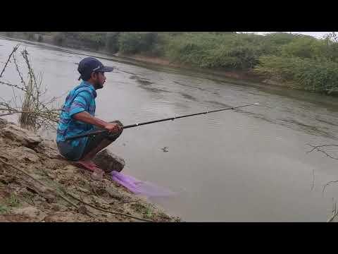 Fish hunting || Fishing in rain