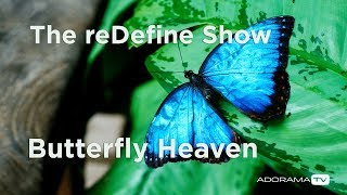 How to Photograph Butterflies: The reDefine Show - Animal Edition! with Tamara Lackey