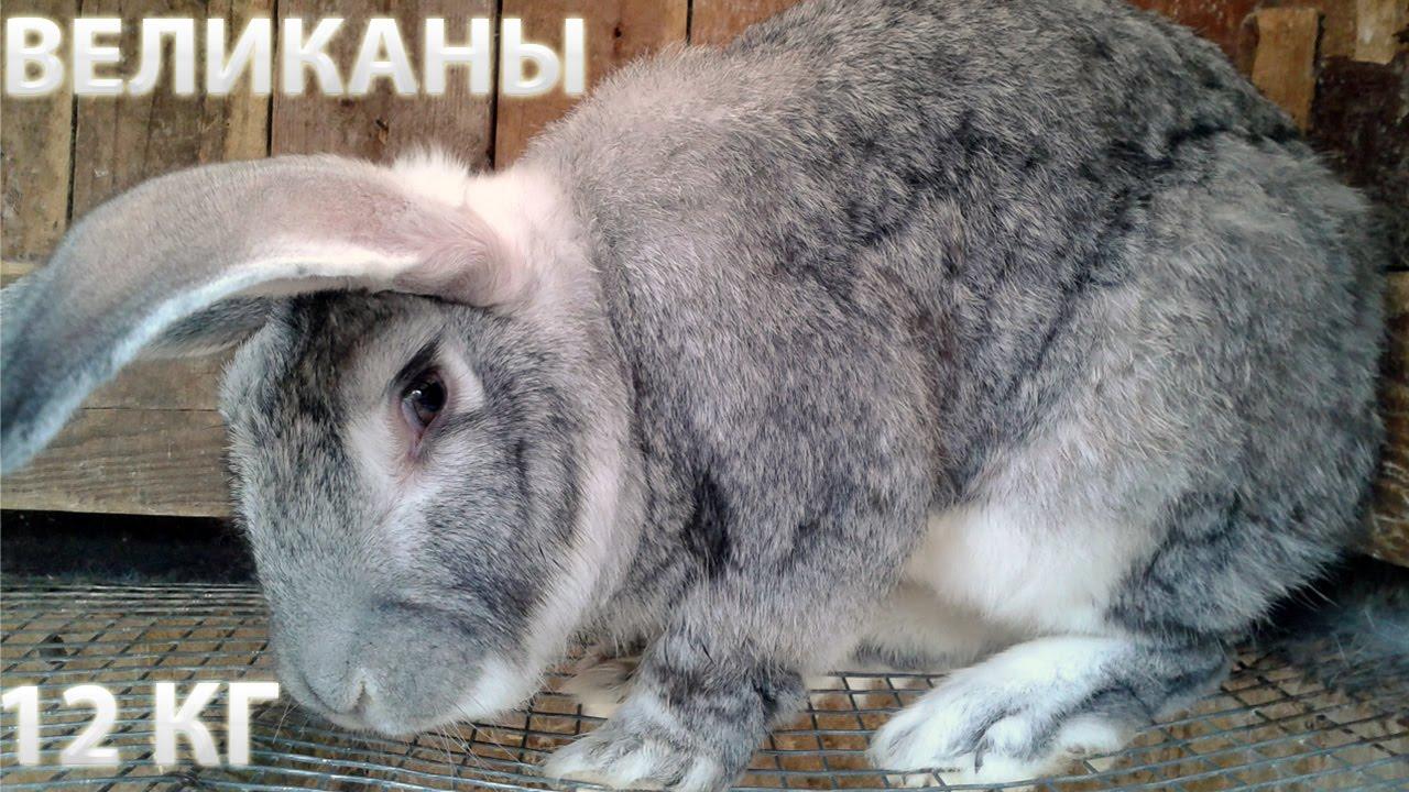 фото породы кроликов