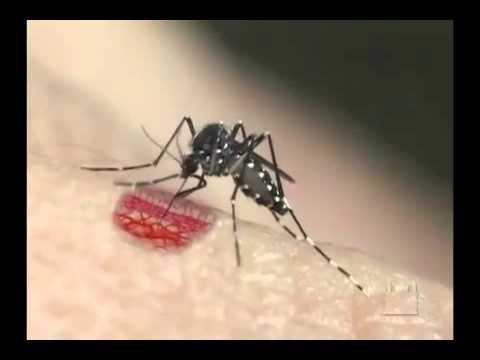 Dengu Dengue Dengi 2017 Sri Lanka