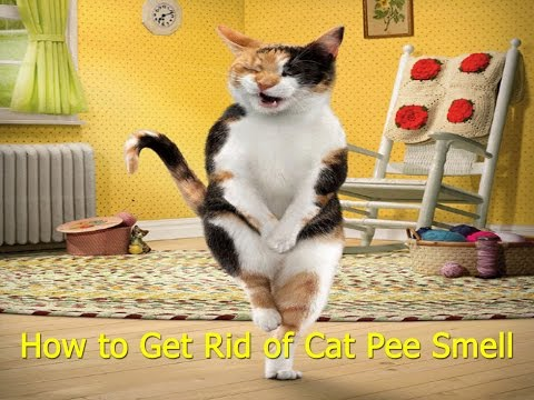 Tips How to Get Rid Of Cat Pee Smell