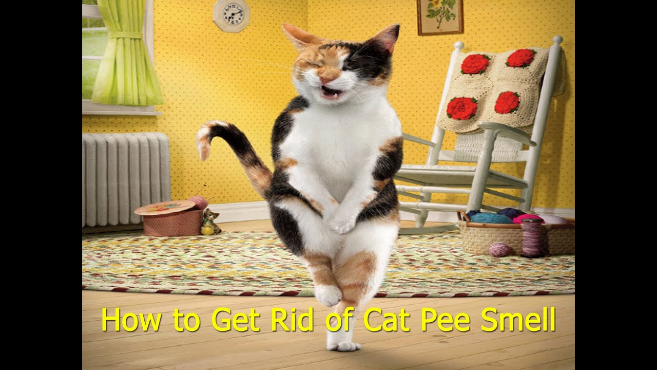 Why do cats pee on