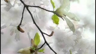 藤山一郎 山のかなたに 町田の桜.