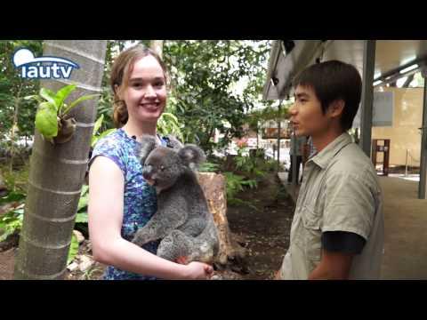 A Date with Australia-Lone Pine Koala Sanctuary