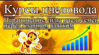 Курсы пчеловода | Наращивание силы пчелосемей перед главным взятком | Урок 2