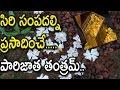 సిరి సంపదల్ని ప్రసాదించే పారిజాత తంత్రమ్    Importance Of Parijatha Flowers In Pooja Rituals