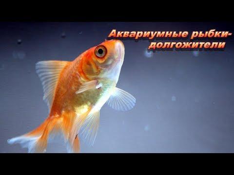 Самые долгоживущие аквариумные рыбки
