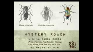 Mystery Roach: Boring Family