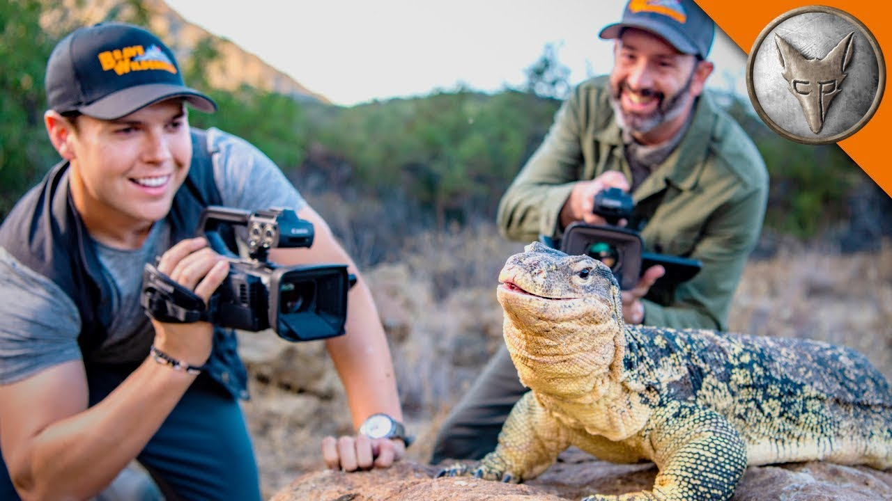 bravest-cameras-for-wildlife